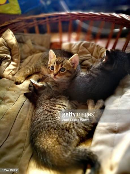 Close-Up Of Kittens Sitting In Basket