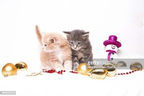 close-up of kittens with christmas decorations against white background - christmas kittens stock pictures, royalty-free photos & images
