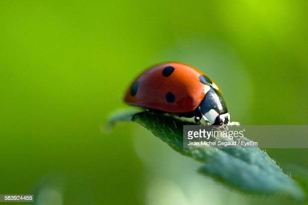 Close-Up Of Ladybug On Leaf Growing At Plant
