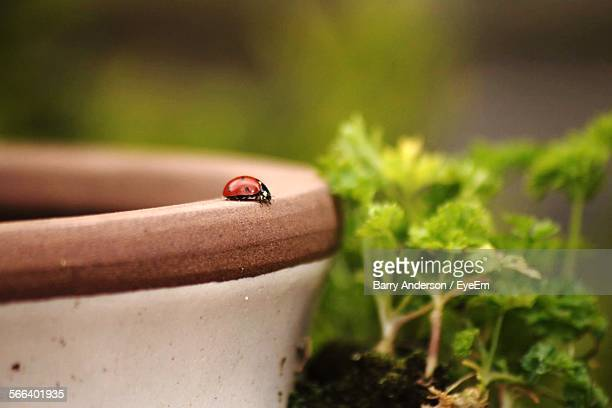 close-up of ladybug on pot in garden - invertebrate stock pictures, royalty-free photos & images