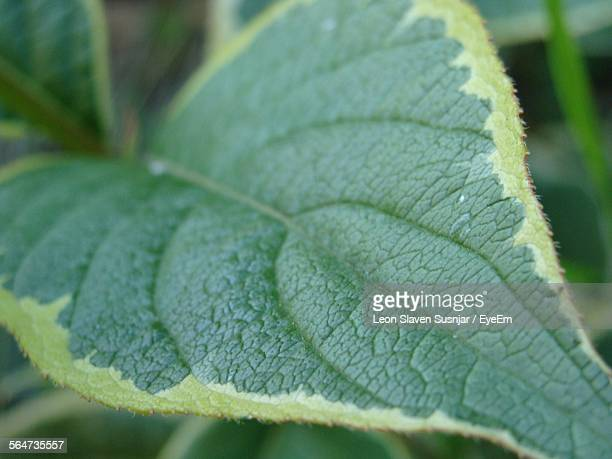 Close-Up Of Leaf Growing On Plant