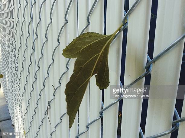 close-up of leaf on chainlink fence - caldwell idaho foto e immagini stock