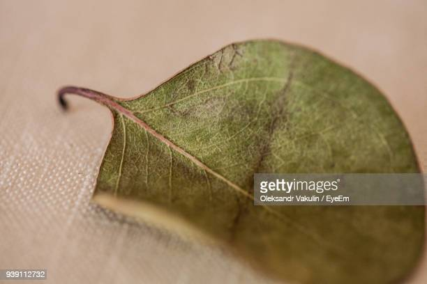 Close-Up Of Leaf On Fabric