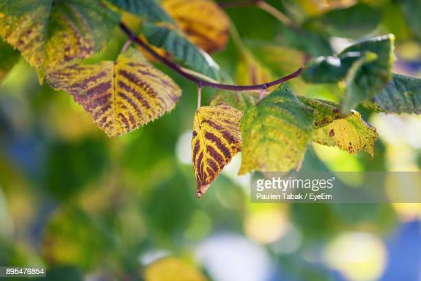 close-up of leaf on tree - paulien tabak stock pictures, royalty-free photos & images