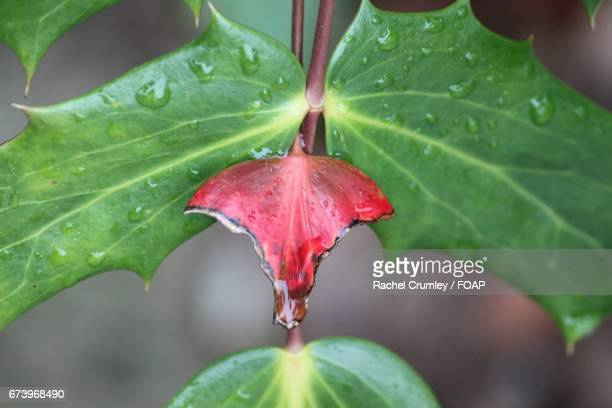 Close-up of leaf with water drop
