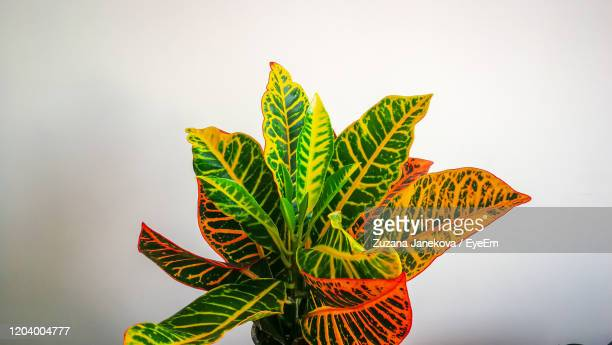 close-up of leaves against white background - zuzana janekova stock pictures, royalty-free photos & images