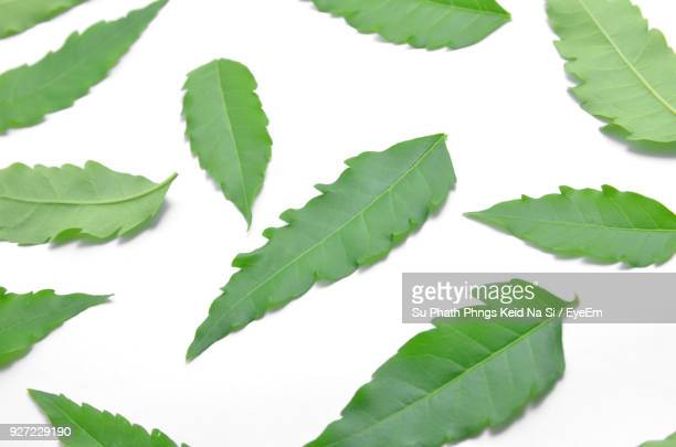 close-up of leaves against white background - ニーム ストックフォトと画像