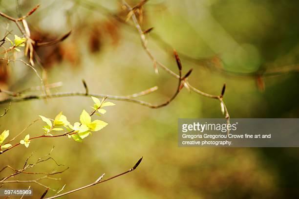 close-up of leaves at spring - gregoria gregoriou crowe fine art and creative photography - fotografias e filmes do acervo
