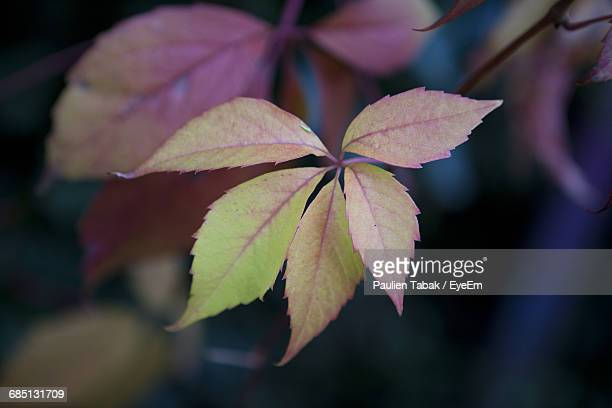 close-up of leaves growing on plant - paulien tabak foto e immagini stock