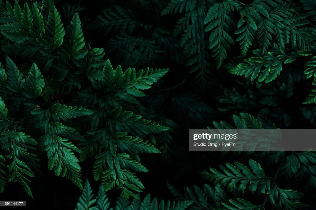 Close-Up Of Leaves Growing On Tree At Night : Stock Photo