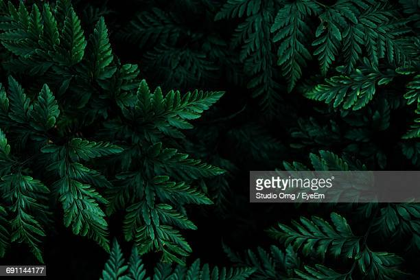 close-up of leaves growing on tree at night - lush foliage stock pictures, royalty-free photos & images
