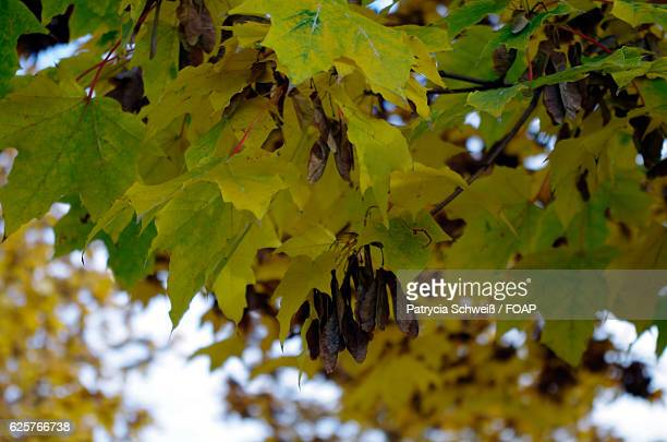 Close-up of leaves growing on tree during autumn