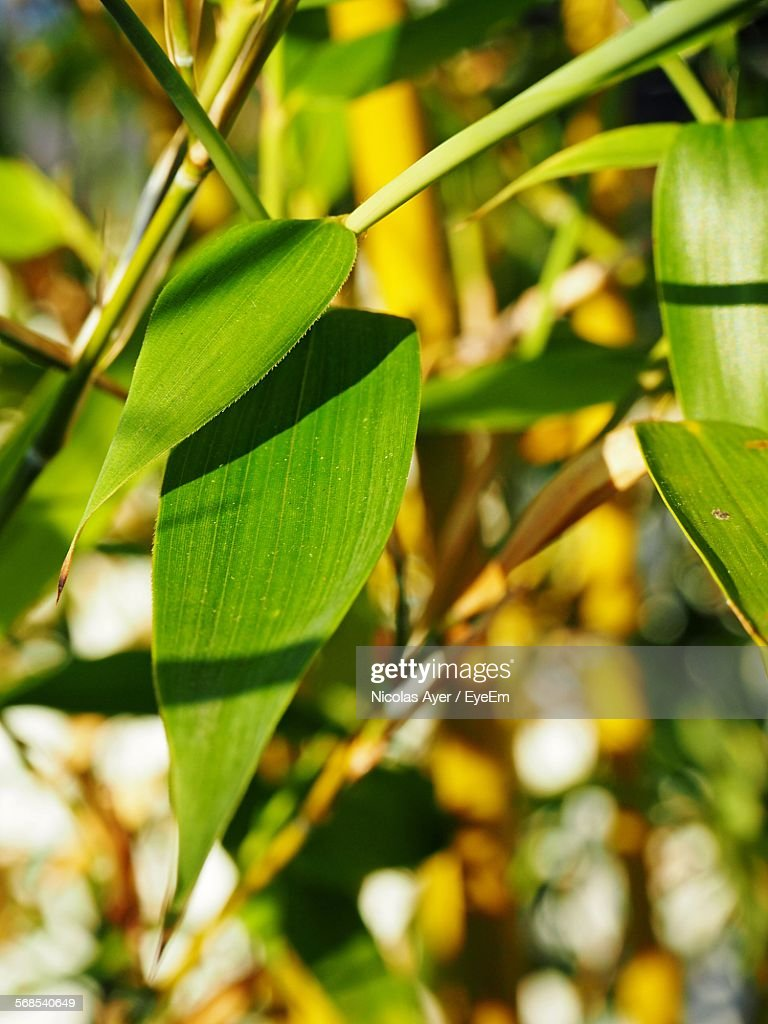 Close-Up Of Leaves Growing Outdoors : Stock Photo