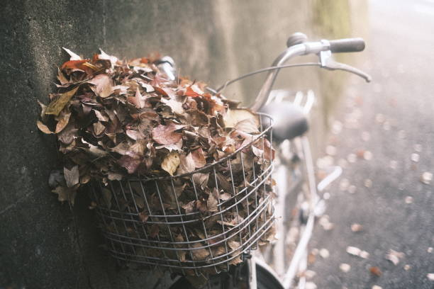 Close-Up Of Leaves In Bicycle Basket