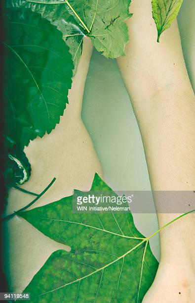 Close-up of leaves on a woman's body, Buenos Aires, Argentina