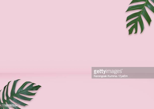 close-up of leaves on pink background - pink background stock pictures, royalty-free photos & images