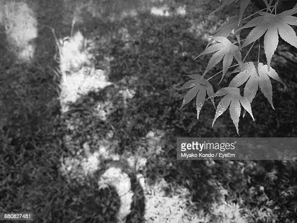 close-up of leaves on plant - 瑞浪市 ストックフォトと画像