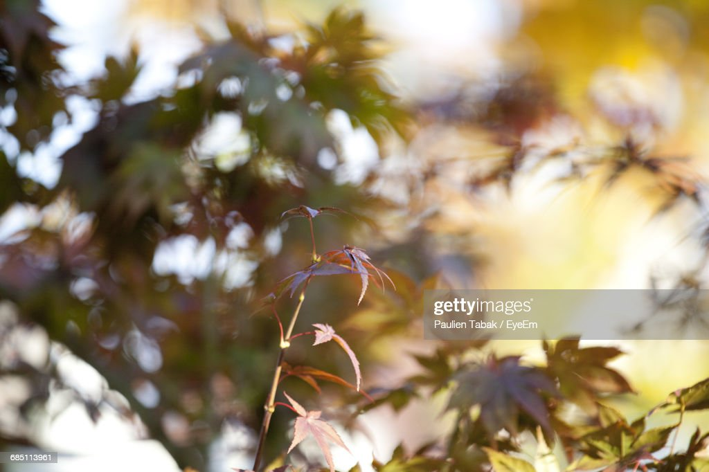 Close-Up Of Leaves On Plant : Stockfoto