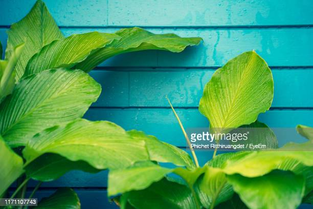 close-up of leaves on table - phichet ritthiruangdet stock photos and pictures