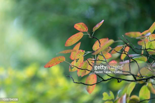 close-up of leaves on tree - paulien tabak stock-fotos und bilder