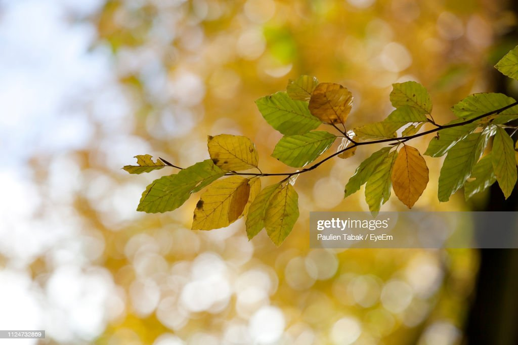 Close-Up Of Leaves On Tree : Stockfoto