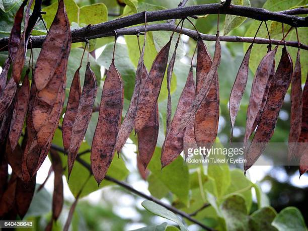 close-up of leaves on tree - solomon turkel stock pictures, royalty-free photos & images