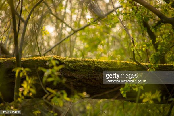 close-up of leaves on tree trunk in forest - branch stock pictures, royalty-free photos & images