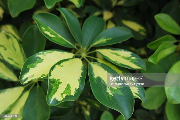 close-up of leaves - weiß stock pictures, royalty-free photos & images