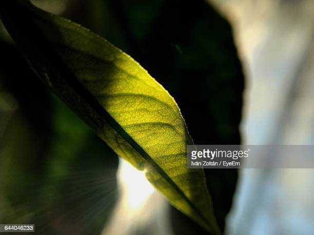 close-up of leaves - iván zoltán stock pictures, royalty-free photos & images