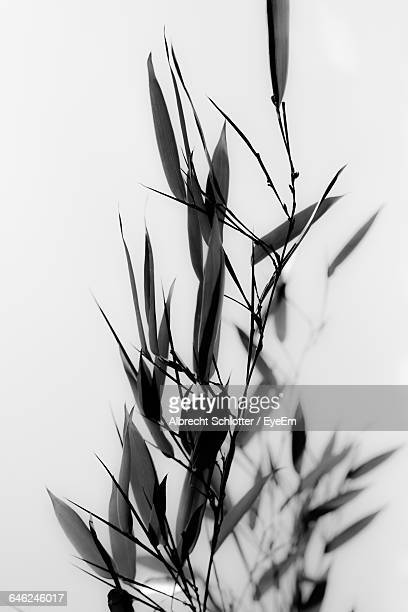 close-up of leaves - albrecht schlotter foto e immagini stock