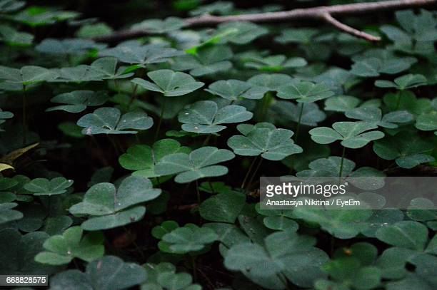 close-up of leaves - nikitina stock pictures, royalty-free photos & images