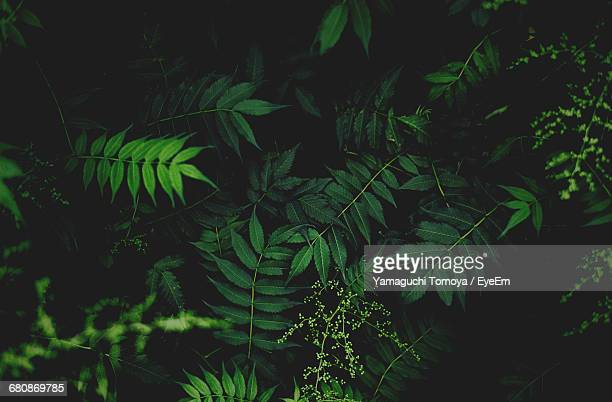 close-up of leaves - lush stock pictures, royalty-free photos & images