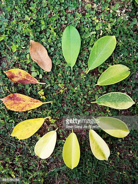 close-up of leaves - durability stock photos and pictures