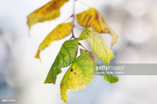 close-up of leaves - paulien tabak stock pictures, royalty-free photos & images