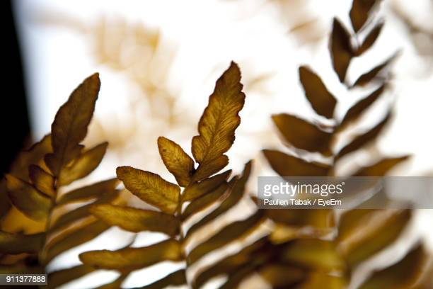 close-up of leaves - paulien tabak photos et images de collection