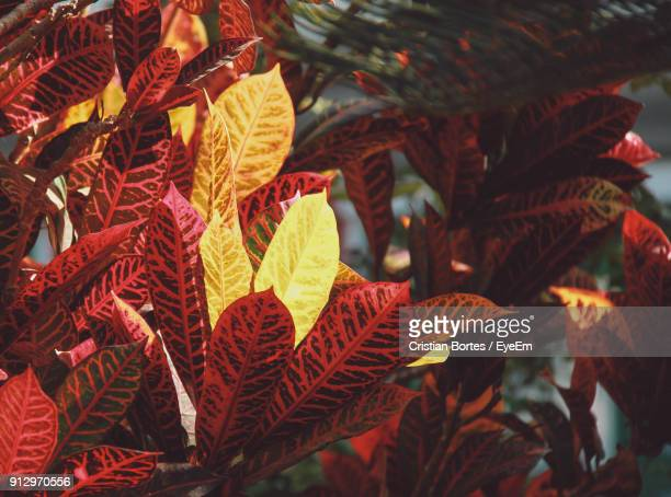 close-up of leaves - bortes stockfoto's en -beelden