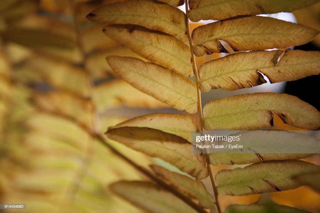 Close-Up Of Leaves : Stockfoto