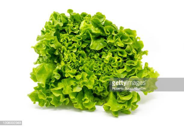 close-up of lettuce against white background - lettuce stock pictures, royalty-free photos & images