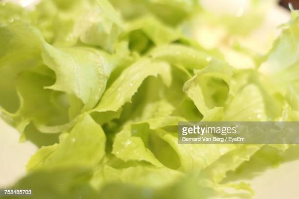close-up of lettuce leaf on table - leaf lettuce stock photos and pictures