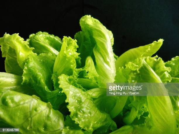 close-up of lettuce over black background - lettuce stock pictures, royalty-free photos & images