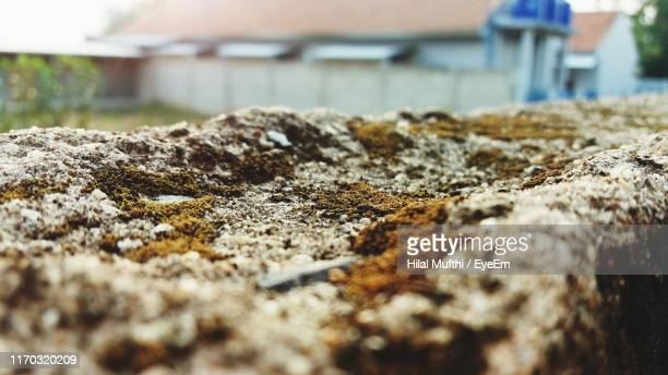 close-up of lichen on retaining wall - hilal stock photos and pictures