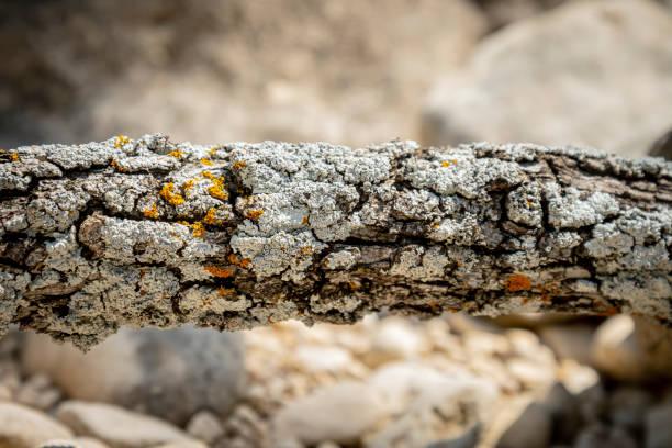 Close-up of lichen on rock,San Antonio,Texas,United States,USA