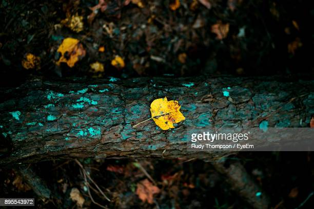 Close-Up Of Lichen On Yellow Leaf