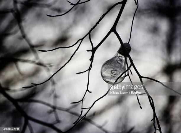 Close-Up Of Light Bulb Hanging On Branch