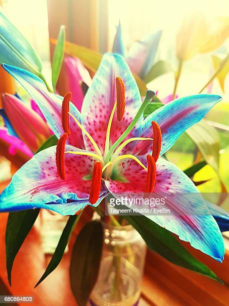close-up of lilies in vase by window - north lincolnshire stock pictures, royalty-free photos & images