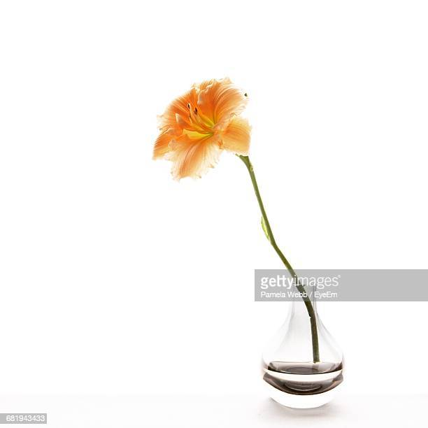 Close-Up Of Lily In Vase Against White Background