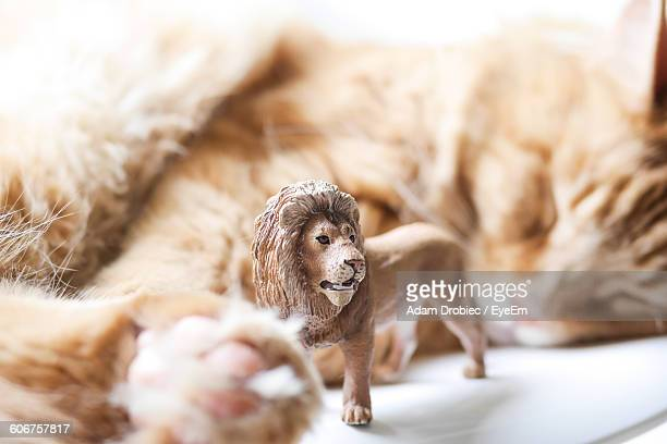 close-up of lion figurine and cat on chair - lion feline stock pictures, royalty-free photos & images