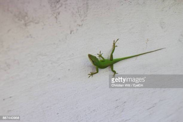 close-up of lizard on wall - geco foto e immagini stock