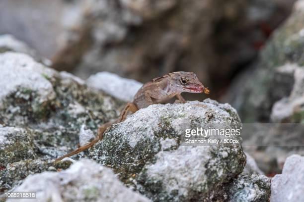 Close-up of lizard perching on rock