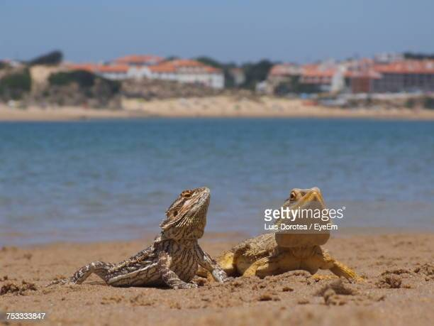 Close-Up Of Lizards On Beach Against Sky